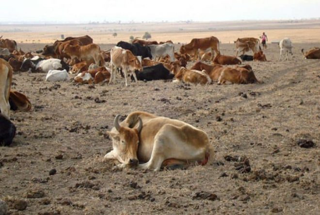 Space technology provides Islamic insurance for herders