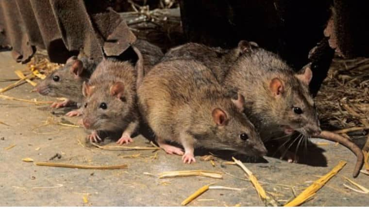 Death toll rises to 124 in endemic Madagascar plague