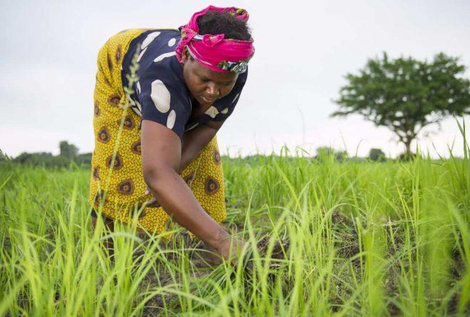 Corporate-led aid wreaks havoc in Tanzania
