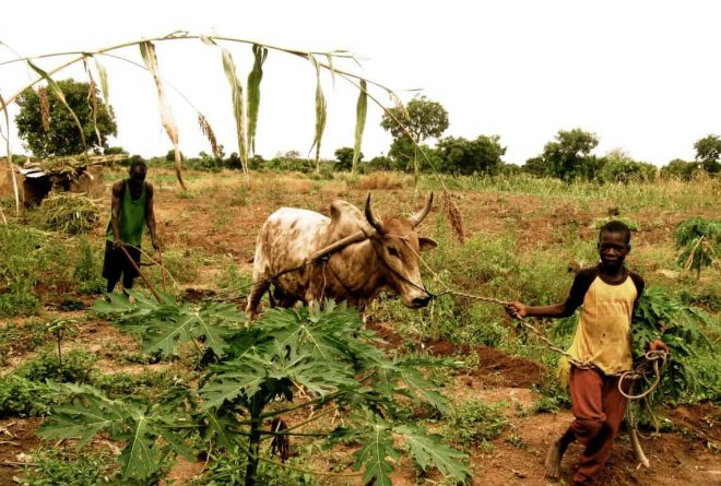 Africa's broken food security value chain: unravelling the hidden fortune