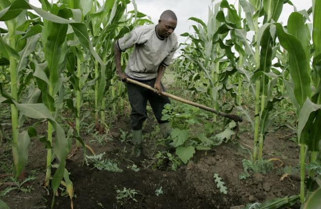 Africa's Historic Moment: The birth of a Pan-African Food Security Assembly