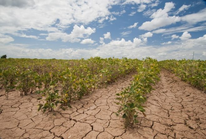 Practical steps to address the ravaging drought in Africa