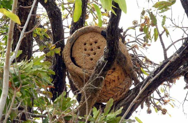 Traditional Bee Hives and Honey collection: Burkina Faso