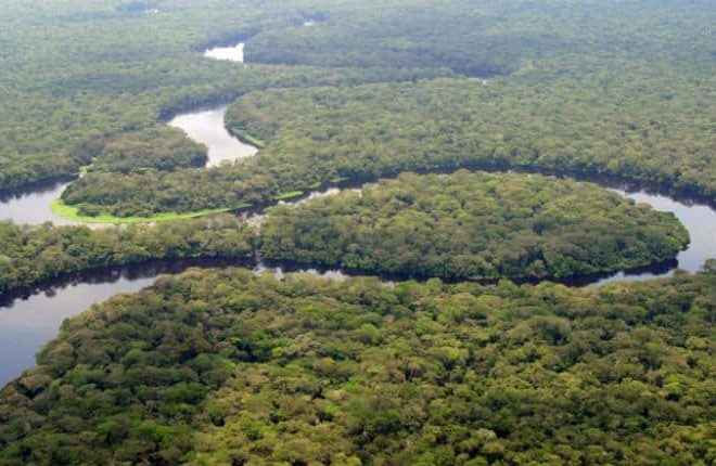 Re-afforestation a Game Changer for Africa's Sustainable Growth?