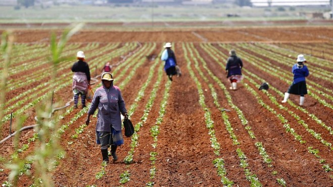 Pathways to the transformation of Africa's agriculture