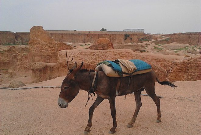 A donkey's tale: Nigeria becomes key hide export hub