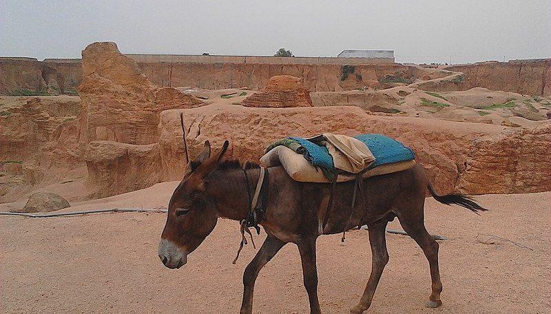 A donkey's tale: Nigeria becomes key hide export hub