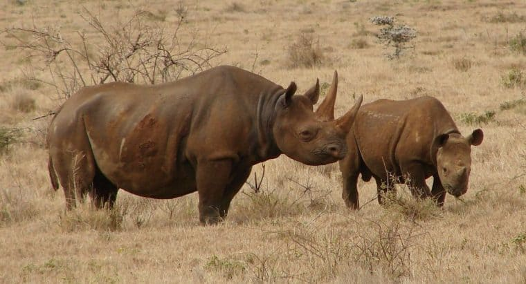 Disregard for Wildlife Conservancy in South Africa and Kenya