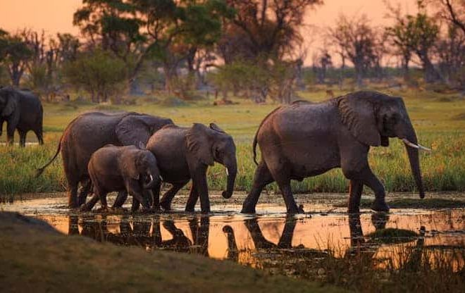 Why Botswana is no longer a safe haven for elephants