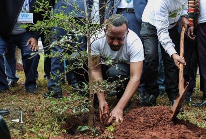 Ethiopia 'breaks' tree-planting world record