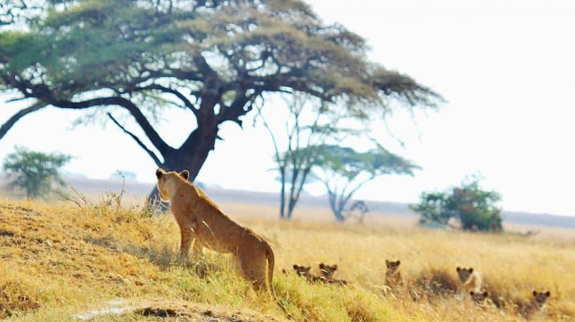 Lupita Nyong'o narrates Discovery Channel's docuseries which explores life on the Serengeti Plain