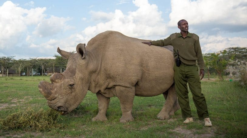 Kifaru: a feature documentary that explores the painful emptiness of extinction
