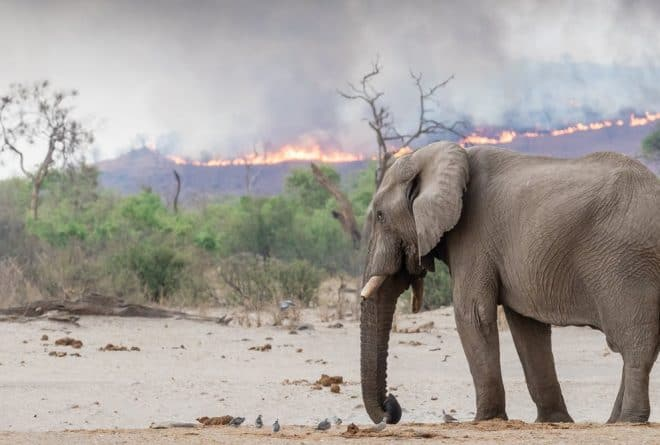 African grasslands are meant to burn – we can't let this distract from the Amazon fires