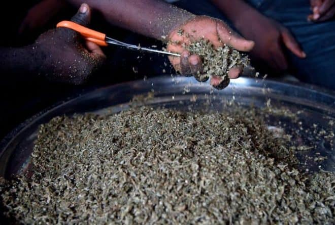 Why some young Nigerians are using cannabis as a normal part of life