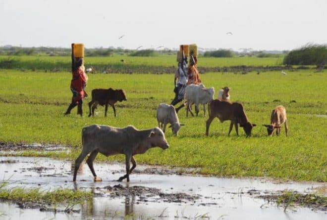 We modelled the effects of climate change on Kenya's Tana River Basin