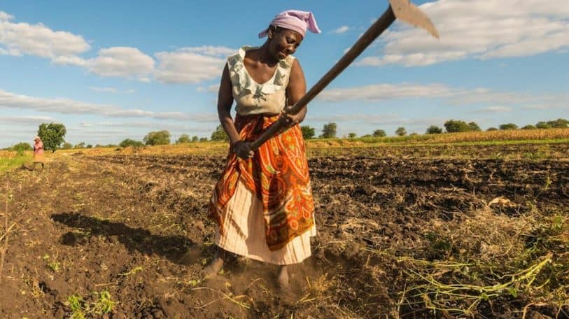 UN report on nutrition gives Africa food for thought